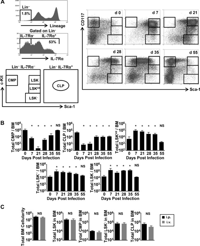 Acquired deficiency of A20 results in rapid apoptosis, systemic inflammation, and abnormal hematopoietic stem cell function